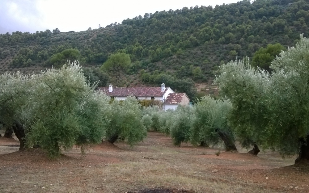 Holiday Farmhouse with Olive Trees