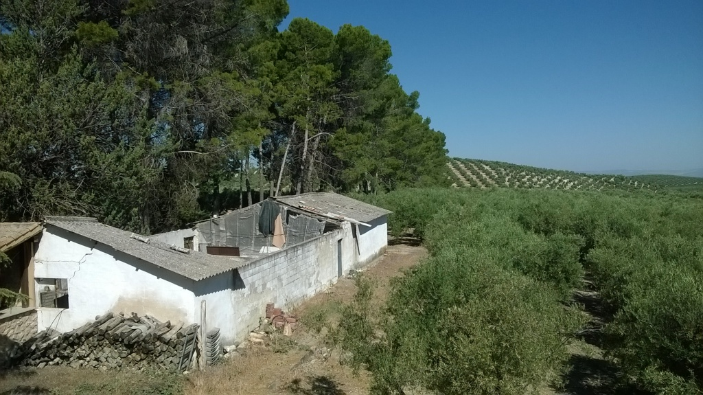 Cortijo with olive trees in Quesada