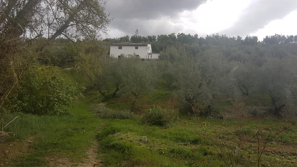 Farmhouse in Quesada