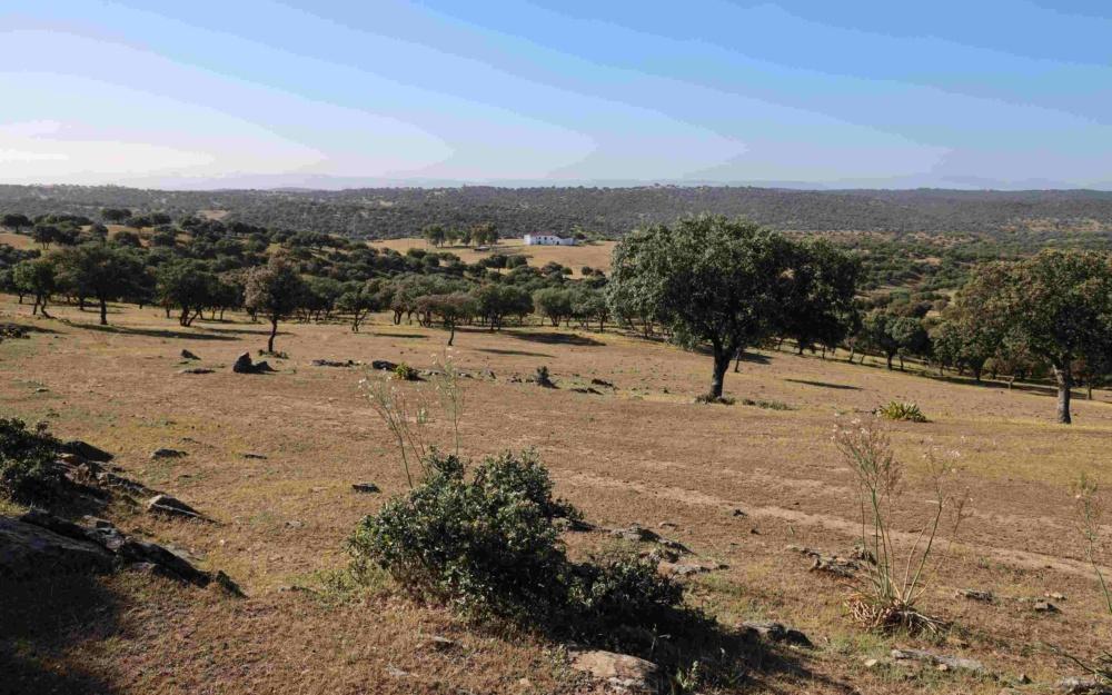 """""""Rancho de caballos andaluces"""" with 237ha land"""