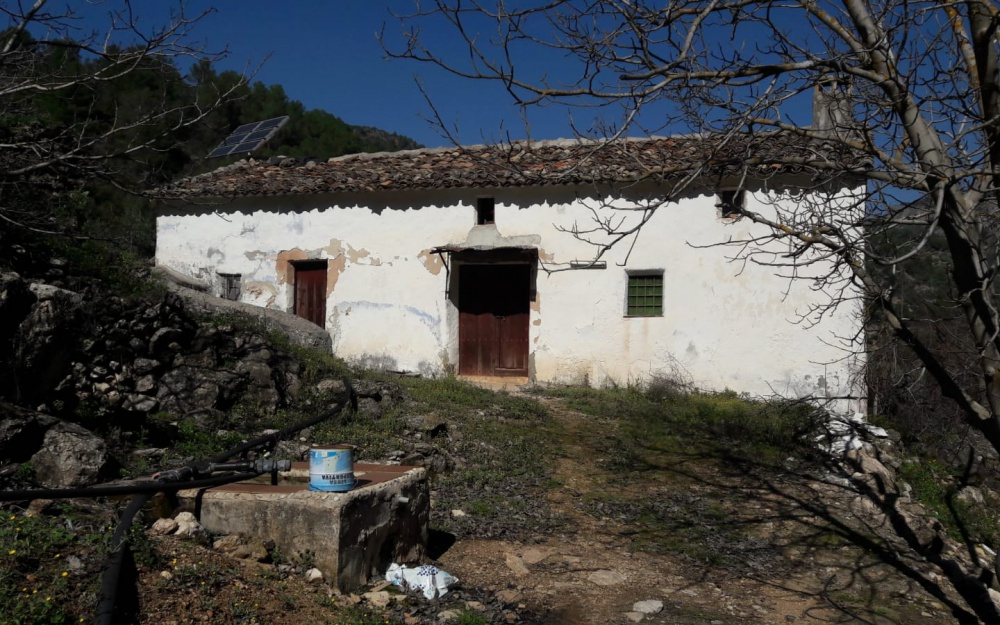 Country house with olive trees
